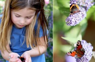 Princess Charlotte Cradles Butterfly In New Photo Taken By Duchess Kate